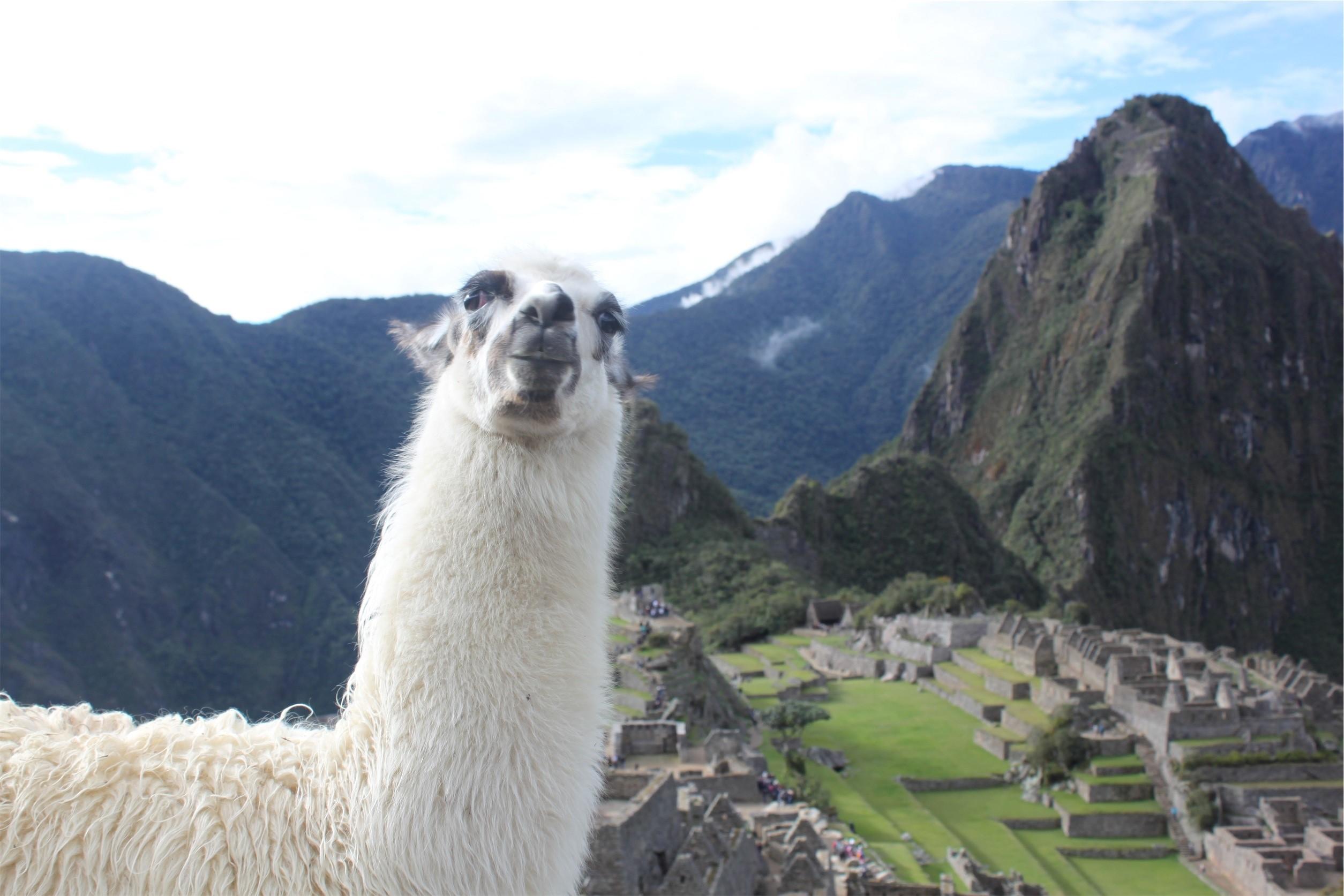 《ペルー小口債務者支援プロジェクトブログ第10弾》Kobranzas S.A.Cが行う金融教育から見るペルーの金融事情